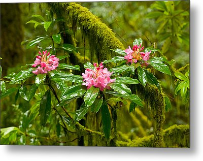 Rhododendron Flowers In A Forest Metal Print by Panoramic Images