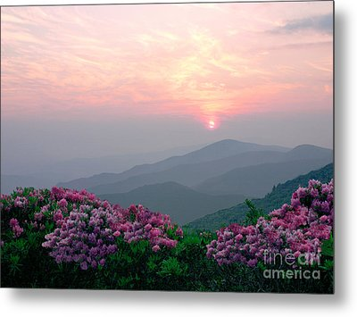 Rhododendron Sunrise Metal Print by Annlynn Ward