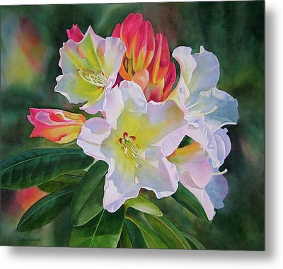Rhododendron With Red Buds Metal Print by Sharon Freeman