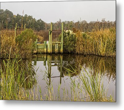 Rice Field Trunks In The Fall Metal Print by Sandra Anderson