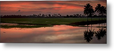 Rice Fields Of India Metal Print by Andrew Soundarajan