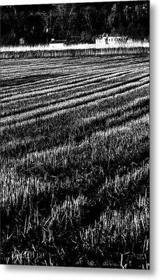 Rice Paddies Metal Print by Edgar Laureano