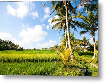 Rice Paddy Fields In Ubud Bali Indonesia Metal Print by Fototrav Print