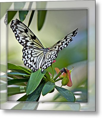 Rice Paper Butterfly 2b Metal Print