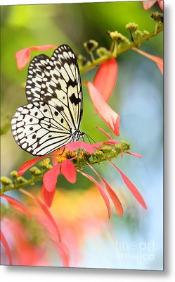 Rice Paper Butterfly In The Garden Metal Print