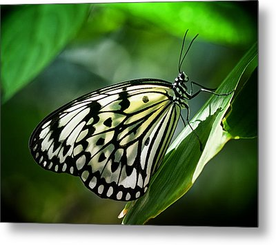 Metal Print featuring the photograph Rice Paper Butterfly by Zoe Ferrie