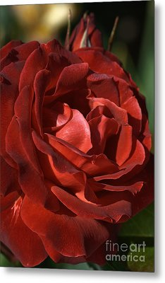 Metal Print featuring the photograph Rich Is Rose by Joy Watson