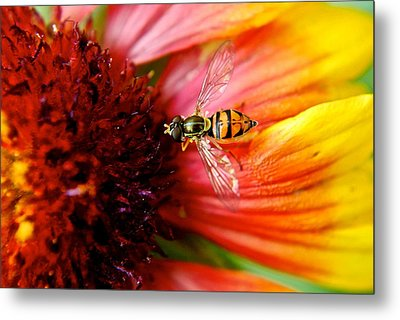 Rich Reward Metal Print by Frozen in Time Fine Art Photography