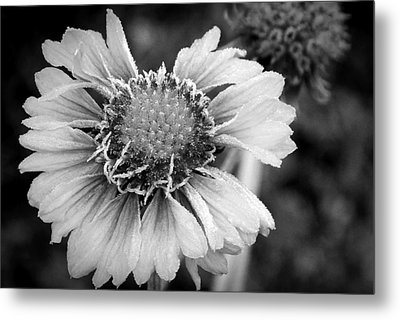 Metal Print featuring the photograph Rime Time by Julia Hassett