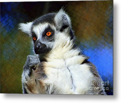 Metal Print featuring the photograph Ring-tailed Lemur by Lisa L Silva
