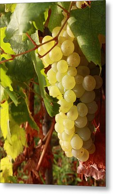 Ripe Grapes Metal Print by Alex Sukonkin