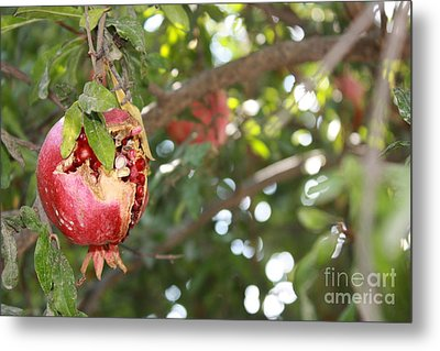 Ripe Pomegranate Metal Print