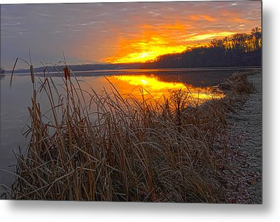 Metal Print featuring the photograph Rising Sunlights Up Shore Line Of Cattails by Randall Branham