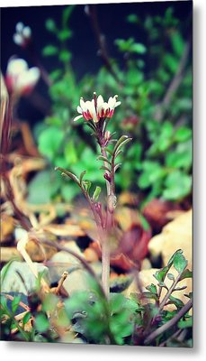 Metal Print featuring the photograph Rising Wildflower by Candice Trimble