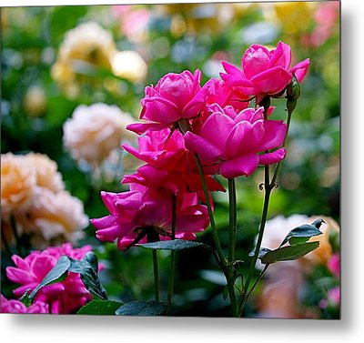 Rittenhouse Square Roses Metal Print by Rona Black