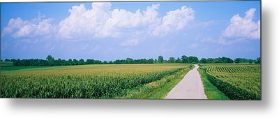 Road Along Corn Fields, Jo Daviess Metal Print by Panoramic Images