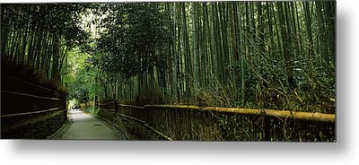 Road Passing Through A Bamboo Forest Metal Print by Panoramic Images