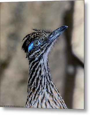 Metal Print featuring the photograph Road Runner by Elaine Malott