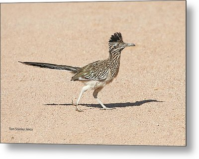 Metal Print featuring the photograph Road Runner On The Road by Tom Janca