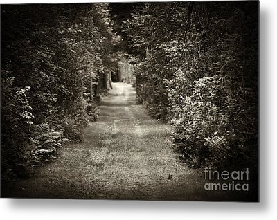 Road Through Forest Metal Print by Elena Elisseeva