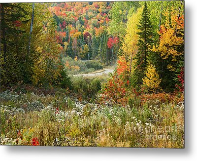 Road To Quill Hill Metal Print by Brenda Giasson
