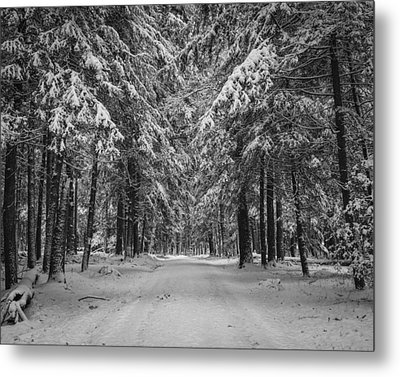 Road To Winter Metal Print by Brian Young