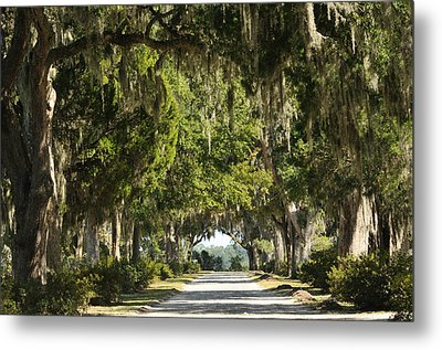 Metal Print featuring the photograph Road With Live Oaks by Bradford Martin