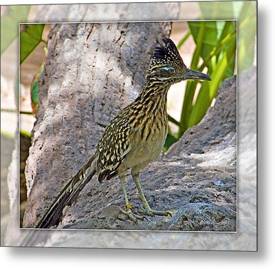 Roadrunner Metal Print by Walter Herrit
