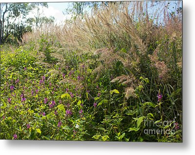 Metal Print featuring the photograph Roadside Blooms by Jose Oquendo