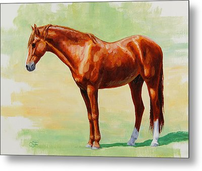 Roasting Chestnut - Morgan Horse Metal Print by Crista Forest
