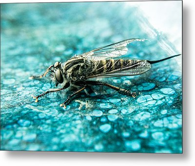 Robber Fly Pm Blue Ceramic Plate Metal Print
