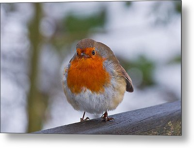 Robin 1 Metal Print by Scott Carruthers