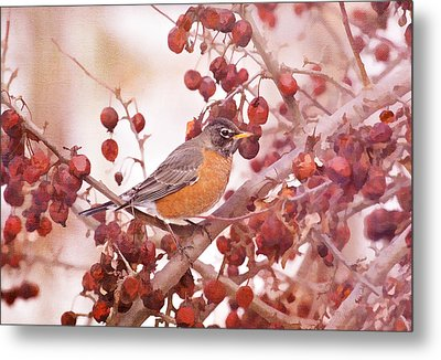 Robin With Red Berries Metal Print by Daphne Sampson