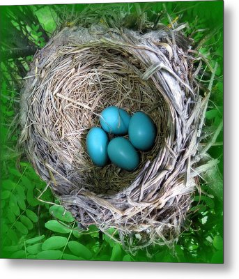 Metal Print featuring the photograph Robin's Eggs by Ramona Johnston
