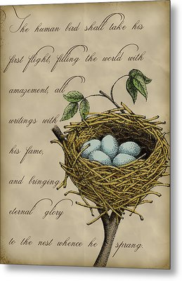 Robin's Nest Metal Print by Christy Beckwith