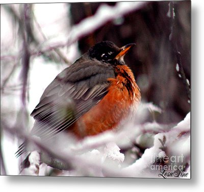 Metal Print featuring the photograph Robins' Patience by Lesa Fine
