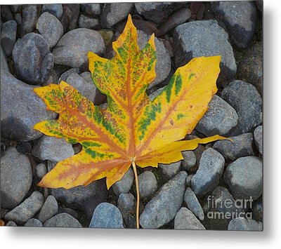 Metal Print featuring the photograph Rock Creek Leaf by Chalet Roome-Rigdon