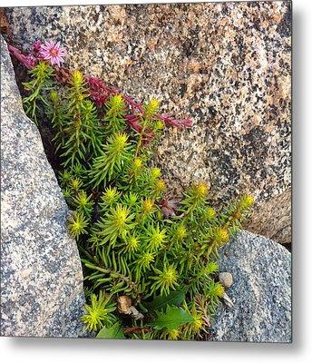 Metal Print featuring the photograph Rock Flower by Meghan at FireBonnet Art