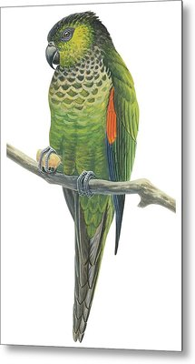 Rock Parakeet Metal Print