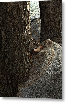 Rockin Tree Metal Print by Randal Bruck