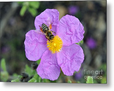 Metal Print featuring the photograph Rockrose Flower With Bee by George Atsametakis