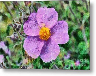 Rockrose Wild Flower Metal Print by George Atsametakis