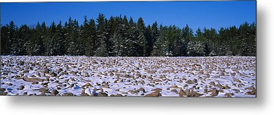 Rocks In Snow Covered Landscape Metal Print by Panoramic Images