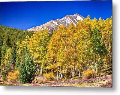 Rocky Mountain Autumn Bonanza Metal Print by James BO  Insogna