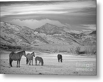 Rocky Mountain Country Morning Bw Metal Print by James BO  Insogna