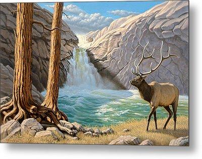 Rocky Mountain Elk Metal Print by Paul Krapf