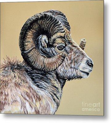 Rocky Mountain Ram Metal Print by Ann Marie Chaffin
