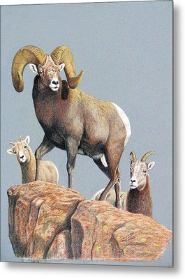 Rocky Mountain Ram Ewe And Lamb Metal Print