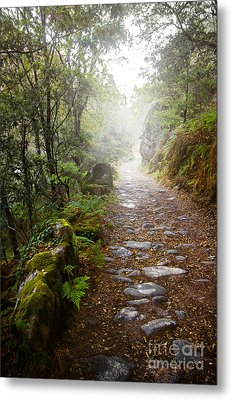 Rocky Trail In The Foggy Forest Metal Print by Carlos Caetano