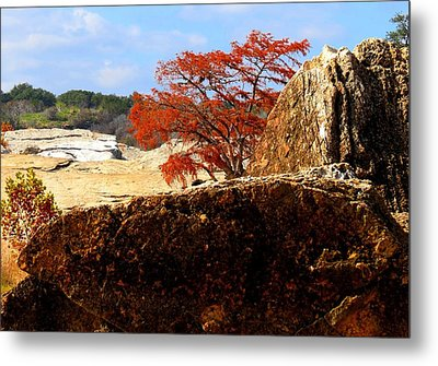 Metal Print featuring the photograph Rocky Tree by David  Norman